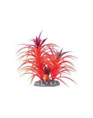 Zolux dekoratyvinis augalas Fejerverkai, 17 cm