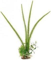 Zolux dekoratyvinių augalų kompozicija