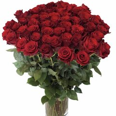Ilgos raudonos rožės 25 vnt. kaina ir informacija | Gyvos gėlės | pigu.lt